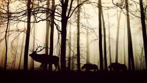 natuurfoto herten wandeling