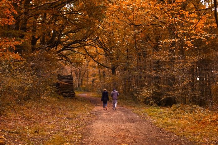 wandelarrangementen in het bos