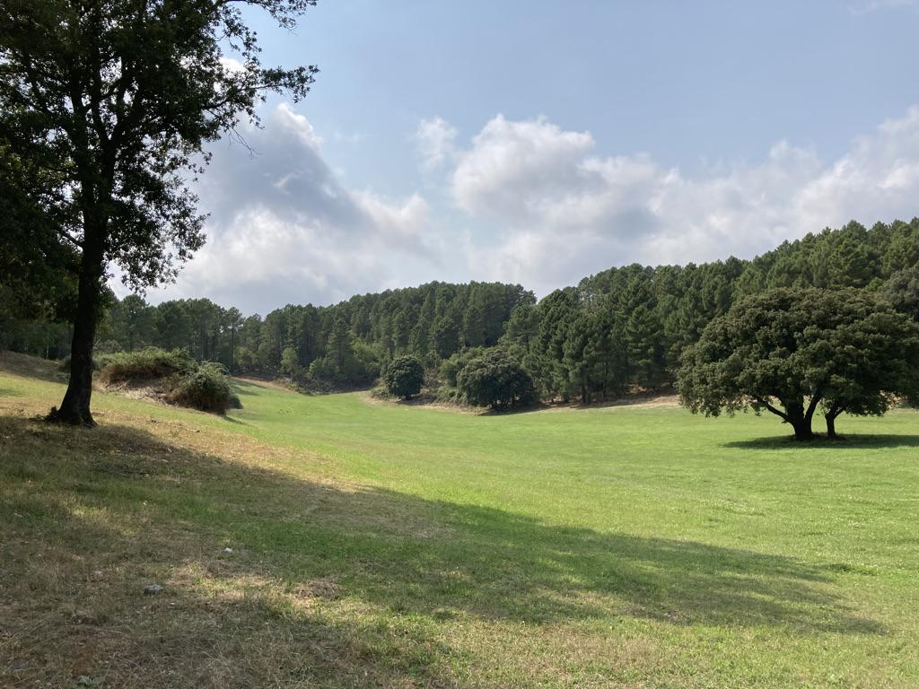 gras op Corsica