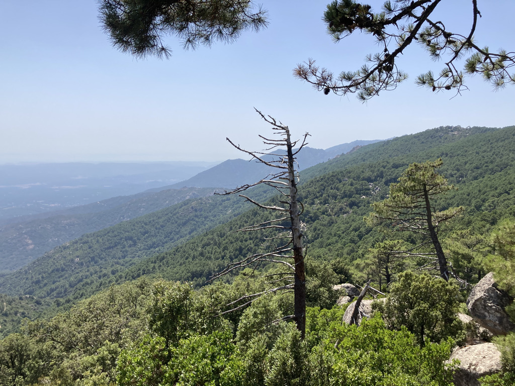 bossen op Corsica
